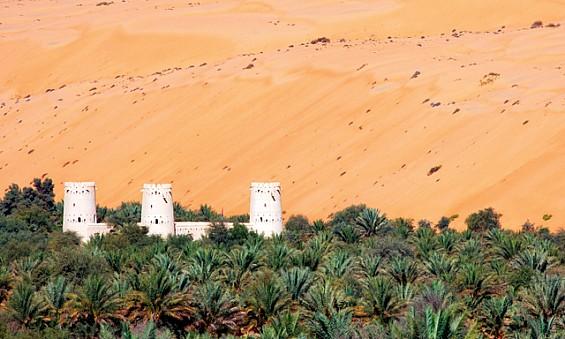 date palms liwa oasis