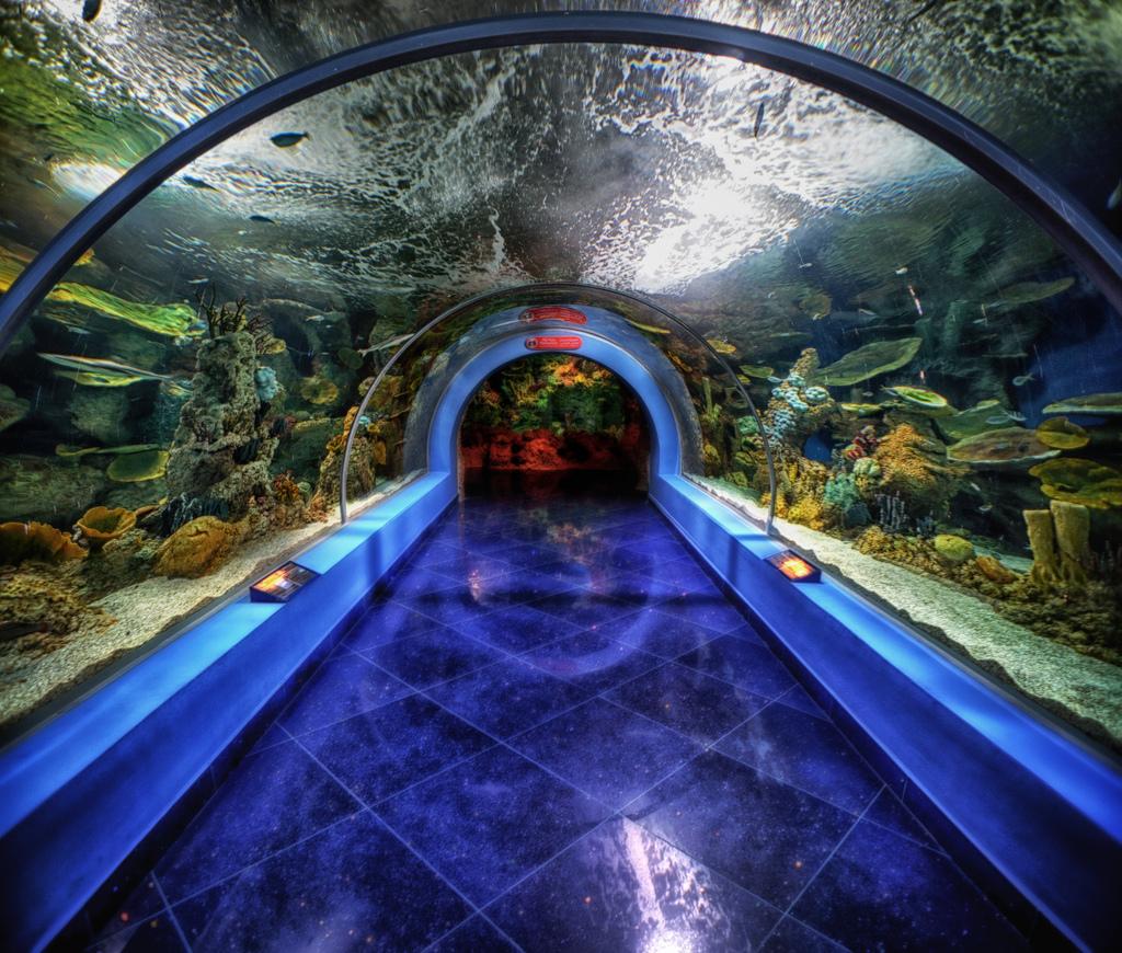 fakieh-aquarium-jeddah