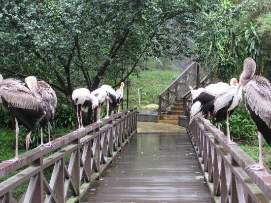 kuala-lumpur-bird-park